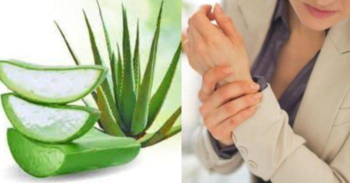 Cây nha đam có chứa nhiều dưỡng chất giúp tiêu viêm, giảm đau nhức, sưng tấy do các bệnh về khớp gây ra.